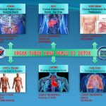 Agen Smart Detox Plus Synergy di Jakarta Barat Hubungi 085782537035